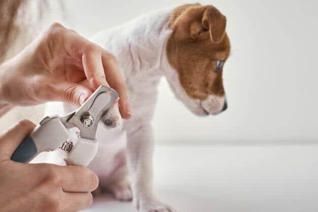 寵物修剪指甲
