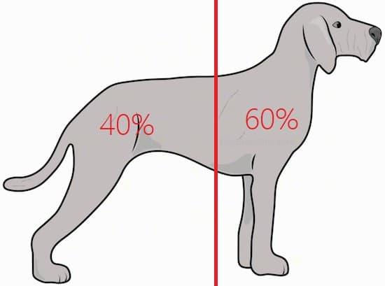 狗狗重心分布