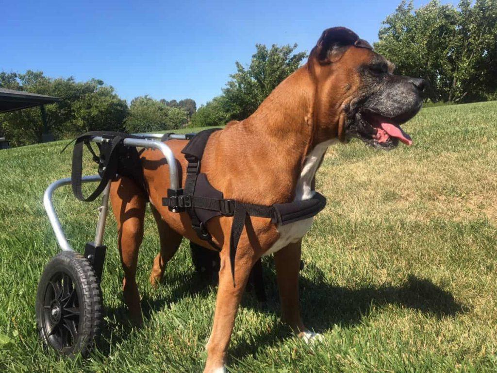 狗狗輪椅 碰地