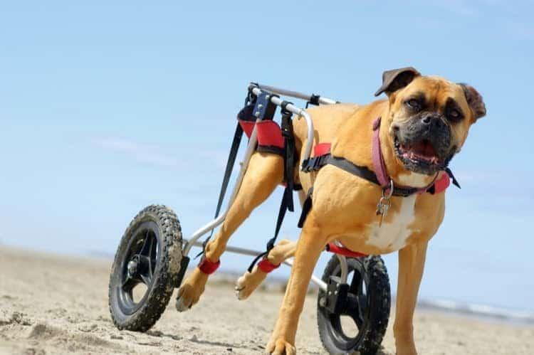 狗狗輪椅 懸空