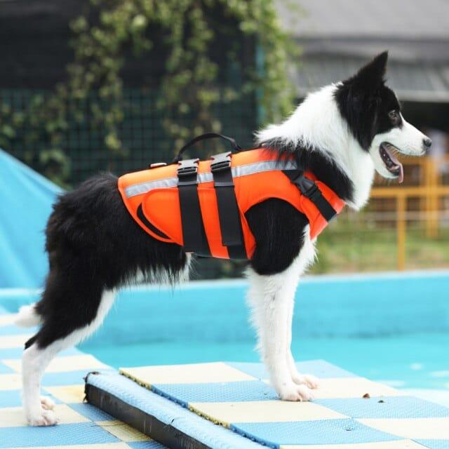 狗狗救身衣  寵物游泳
